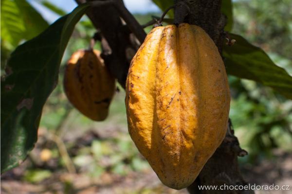 kakao Arriba